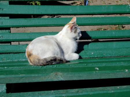 Chat à adopter à Pierrelatte 26700 : Diabolo, Autre