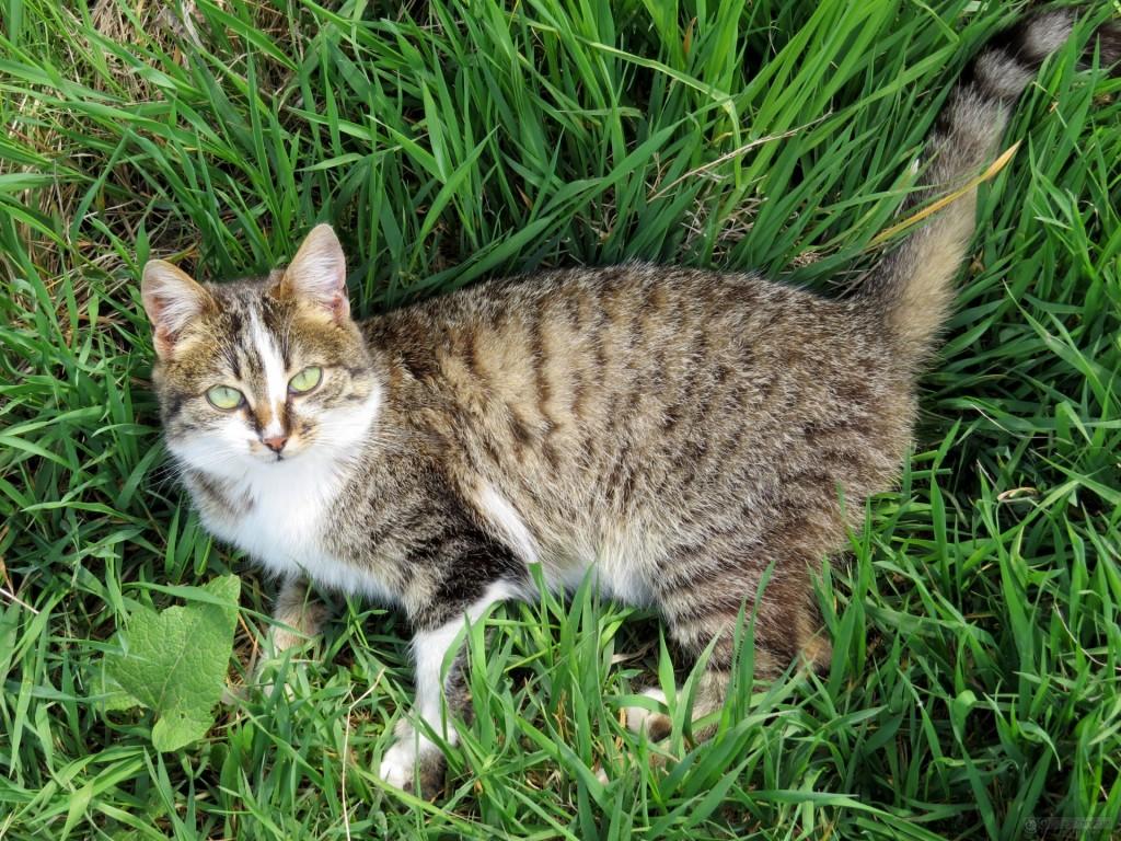 Chat trouvé à Fontainebleau 77300, Européen