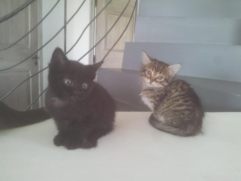 Chat à adopter à Aix-en-Provence 13100 : Paco, croisé