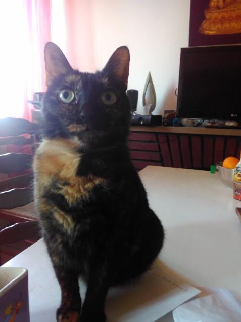 Chat trouvé à Amiens 80000,