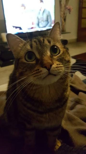 Chat trouvé à Aix-en-Provence , Chat de gouttière
