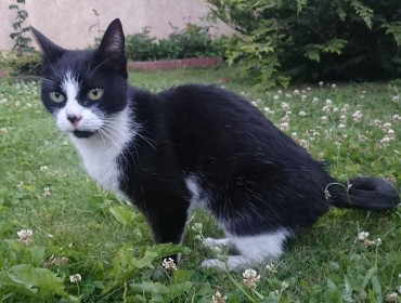 Chat trouvé à Drancy 93700, Chat de gouttière