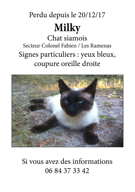 Chat perdu à Montreuil 93100 : Milky, Siamois