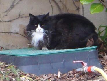 Chat trouvé à Aix-en-Provence , Angora Turc
