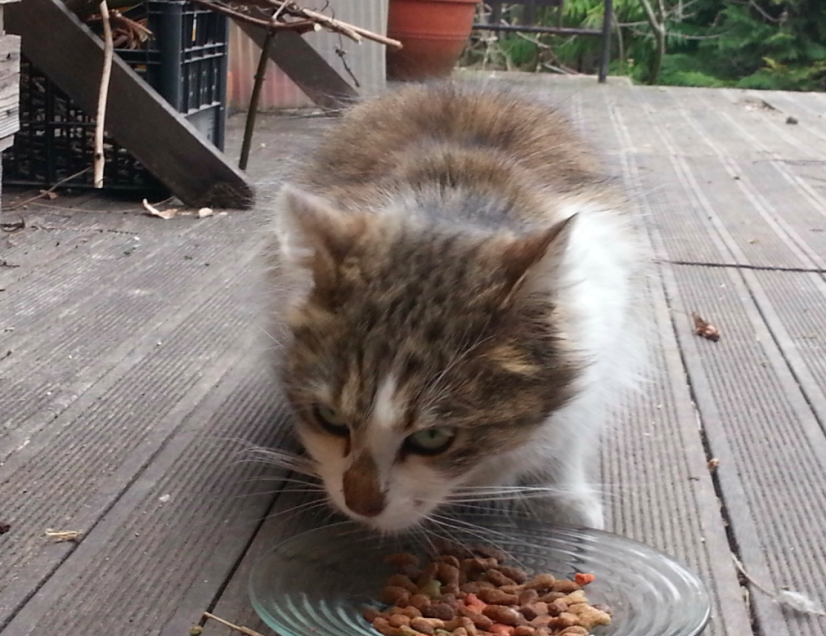 Chat trouvé à Montreuil 93100,