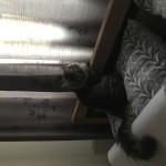 Chat perdu à Tarascon 13150 : Jo, Chat de gouttière