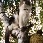 Chat perdu à Champigny-sur-Marne 94500 : Câline, Autre