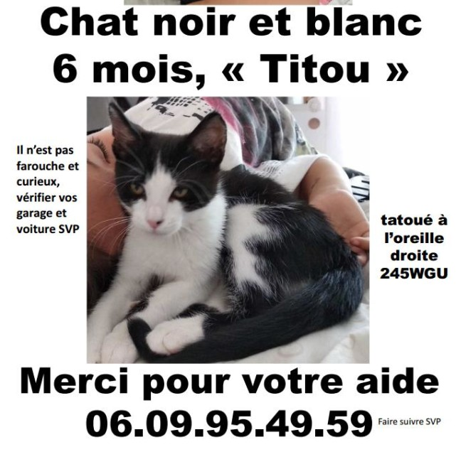 Chat perdu à Nîmes 30900 : titou, Européen