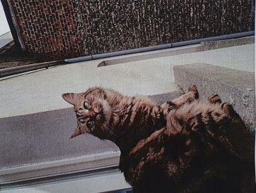 Chat perdu à Saint-Gilles : Milka , Autre