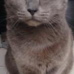 Chat perdu à Lille 59800 : VIC, Chat de gouttière