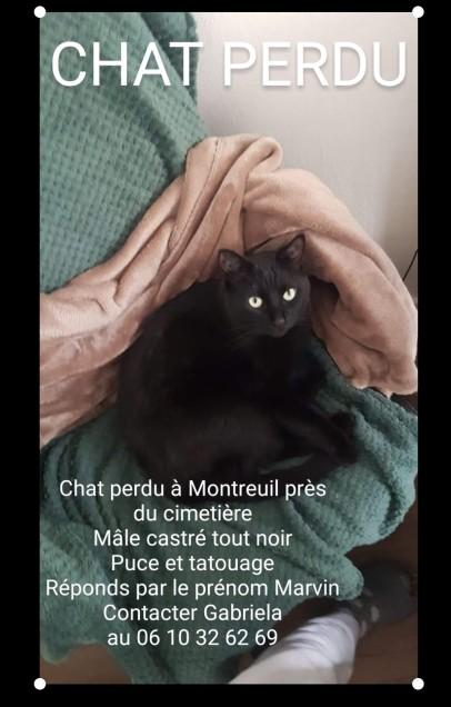 Chat perdu à Montreuil 93100 : MARVIN, Européen