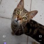 Chat perdu à Rosny-sous-Bois 93110 : LOUISE, Européen