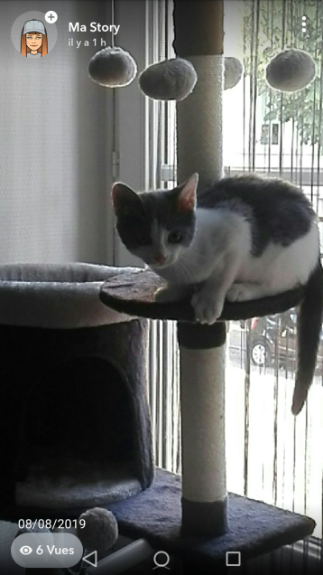 Chat perdu à Beaune 21200 : Miou(Mimi), Européen