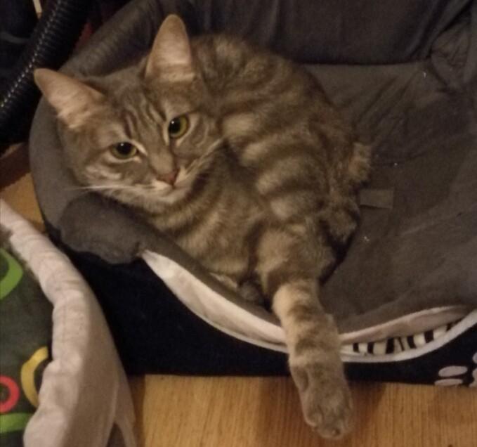 Chat perdu à Arbois 39600 : Mimine, Chat de gouttière