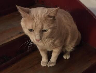Chat trouvé à Paris 75009, Autre