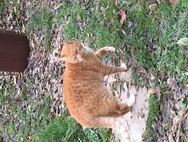 Chat trouvé à Collemiers 89100, Autre