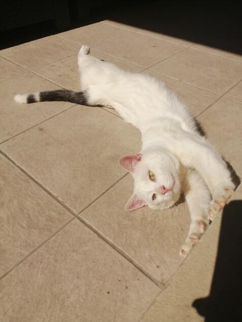 Chat perdu à Marseille  : Doudou, Autre