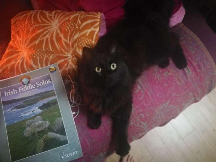 Chat perdu à Montreuil 93100 : Mona, Autre