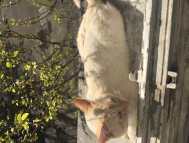 Chat perdu à Le Perreux-sur-Marne 94170 : Garcimore , Autre