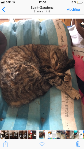 Chat perdu à Saint-Gaudens 31800 : SURIMI, Européen