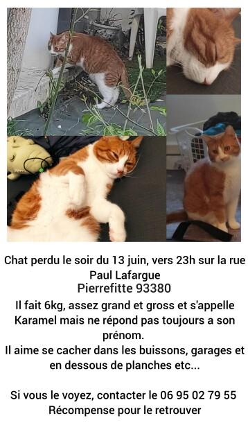 Chat perdu à Pierrefitte-sur-Seine 93380 : Karamel, Européen