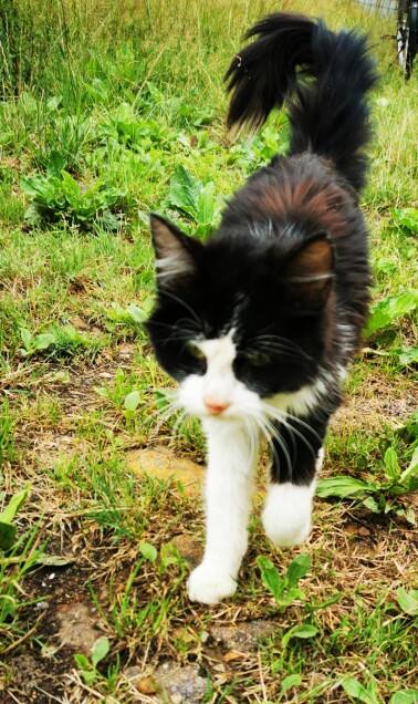 Chat trouvé à Touvois 44650, Autre