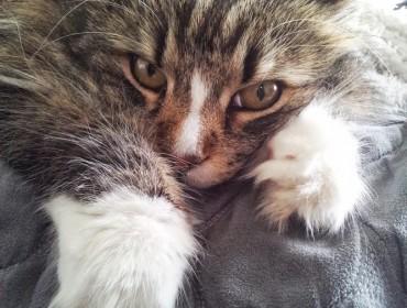 Chat perdu à Aix-en-Provence : minoush, Chat de gouttière