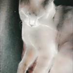Chat perdu à Les Pavillons-sous-Bois 93320 : Loco, Chartreux