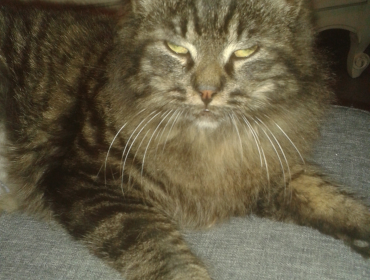 Chat perdu à : havane, Chat de gouttière